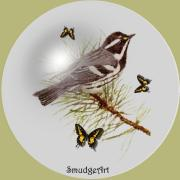 Aves Digital Art - Gray Warbler by Madeline  Allen - SmudgeArt