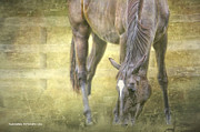 Horse Images Posters - Graze Poster by Ryan Courson