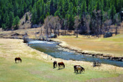 Colorado Stream Prints - Grazing Print by Angelina Vick