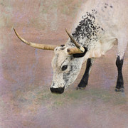 Texas Longhorn Cow Prints - Grazing Print by Betty LaRue