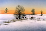 Jerseys Prints - Grazing Cattle in Winter Print by Conrad Mieschke