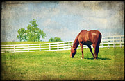 Equine Photo Posters - Grazing Poster by Darren Fisher