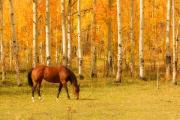 Lightning Wall Art Prints - Grazing Horse in the Autumn Pasture Print by James Bo Insogna
