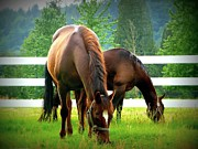 Horse Pasture Prints - Grazing Print by Lori Seaman