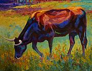 Texas Longhorn Cow Framed Prints - Grazing Texas Longhorn Framed Print by Marion Rose