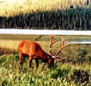 Rack Digital Art - Grazing Wapiti by Garry Staranchuk