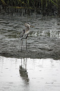 Marsh Bird Prints - Great Blue Heron - Low Tide Print by Suzanne Gaff