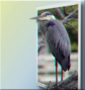 Sfx Photo Prints - Great Blue Heron - Red-Cyan 3D Glasses Required Print by Brian Wallace