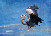 Daytime Digital Art Framed Prints - Great Blue Heron  Framed Print by Betty LaRue