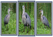 Mangroves Prints - Great Blue Heron Collage Print by DigiArt Diaries by Vicky Browning