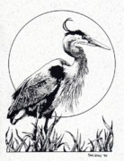 Blue Heron Drawings Prints - Great Blue Heron Print by Donald Aday