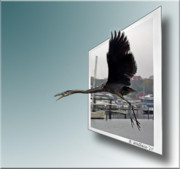 Sfx Photo Prints - Great Blue Heron In Flight Print by Brian Wallace