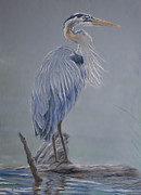 Heron Pastels - Great Blue Heron by Kathryn Yoder