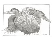 Blue Heron Drawings Prints - Great Blue Heron Print by Kathy Burns