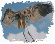 Colored Pencil Metal Prints - Great Blue Heron Landing Metal Print by Larry Linton