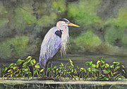 Great Birds Mixed Media Posters - Great Blue Heron on Lily Pad Poster by Laurie Tietjen