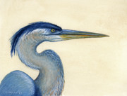 Shorebird Paintings - Great Blue Heron Portrait by Charles Harden