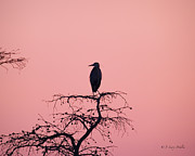 Silhouette Digital Art Prints - Great Blue Heron Silhouette Print by J Larry Walker