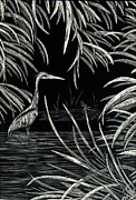 Blue Heron Drawings Prints - Great Blue Heron Print by Terri Mills