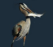 Great Catch Posters - Great Blue Heron with Fish Poster by Paulette  Thomas