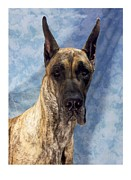 Great Dane Digital Art - Great Dane 567 by Larry Matthews