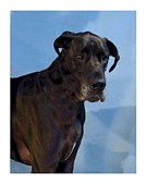 Great Dane Digital Art - Great Dane 740 by Larry Matthews