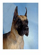 Great Dane Digital Art - Great Dane 949 by Larry Matthews