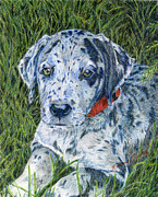 Puppy Drawings - Great Dane Merle by Karen Curley