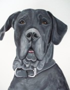 Great Dane Paintings - Great Dane Portrait by Anita Stone