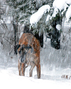 Storm Prints Posters - Great Dane Rufus Looking into a Blizzard Poster by Lila Fisher-Wenzel