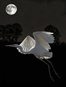 Great Birds Mixed Media Posters - Great Egret In Flight Poster by Eric Kempson