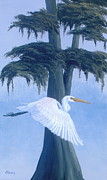 Bird Prints Paintings - Great Egret in Flight by Michael Allen