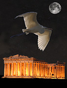 Artemis Mixed Media Framed Prints - Great Egret Parthenon Athens Framed Print by Eric Kempson