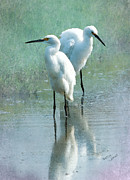 Watercolor Effect Framed Prints - Great Egrets Framed Print by Betty LaRue