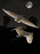 Great Birds Mixed Media Posters - Great Egrets In Flight Poster by Eric Kempson