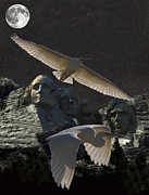 Granite Mixed Media Posters - Great Egrets Mount Rushmore  Poster by Eric Kempson