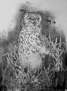Alfred Ng - great horned owl