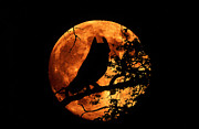 Great Horned Owl And Moon Print by Kenneth Fink and Photo Researchers