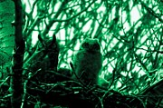 Owlet Prints - Great Horned Owl And Owlet Print by Jeff  Swan
