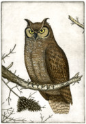Etching Posters - Great Horned Owl Poster by Charles Harden