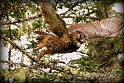Shamik Tobin - Great Horned Owl in...