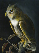 Great-horned Owls Paintings - Great-horned Owl by John Neal Mullican