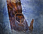 Owl Digital Art Prints - Great-Horned Owl Nest Print by J Larry Walker