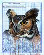 Peter Ambush - Great Horned Owl