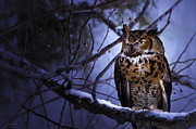 Great Horned Owl Framed Prints - Great Horned Framed Print by Ron Jones