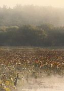 Great Meadows National Wildlife Refuge Blue Heron Fog Print by John Burk
