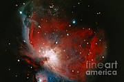 Nebula Photograph Prints - Great Nebula In Orion Print by Science Source