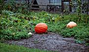 LeeAnn McLaneGoetz McLaneGoetzStudioLLCcom - Great Pumpkin Patch