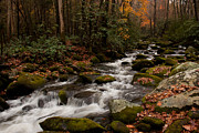 Benjamin Dahl - Great Smoky Mountains...
