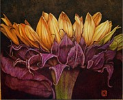 Ink Pyrography - Great Sunflower by Cynthia Adams